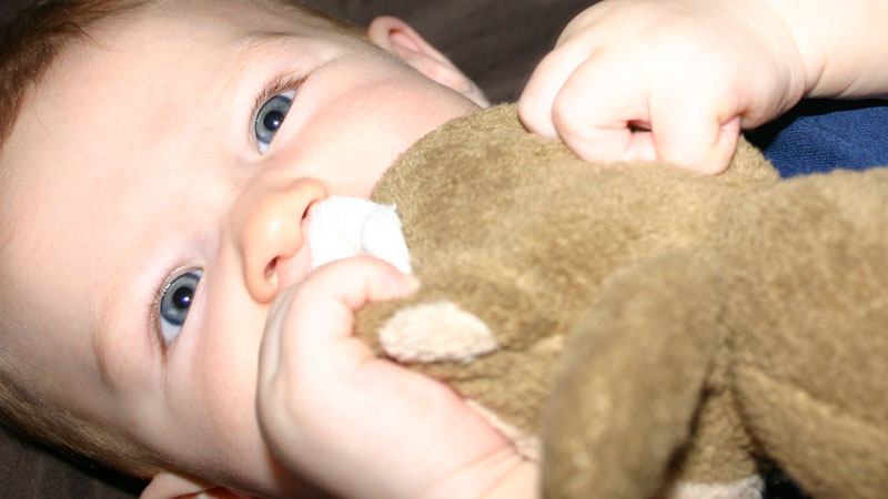 Baby Eats Stuffed Animal