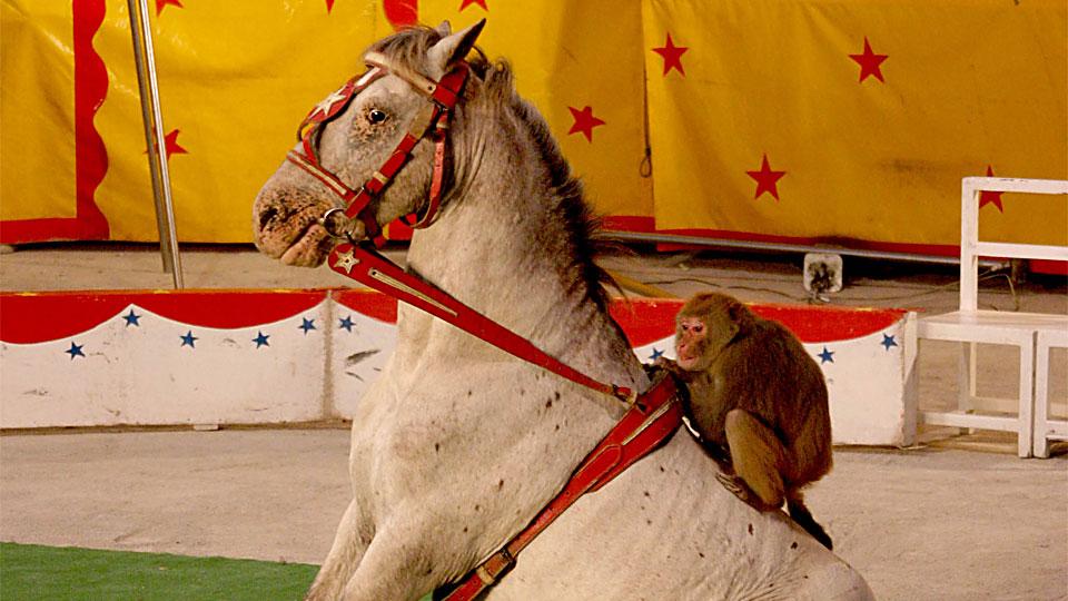 Horse with a Monkey Secret