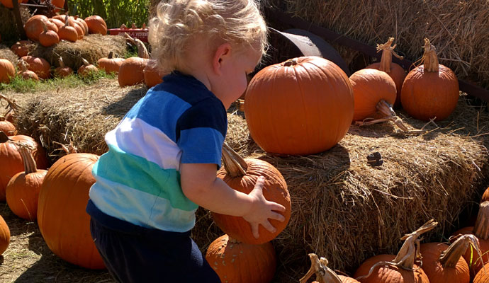 That Poore Baby picking a pumpkin